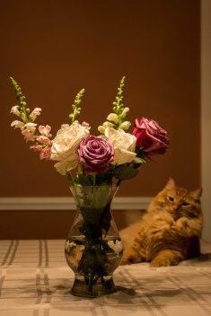 Flowerahi1