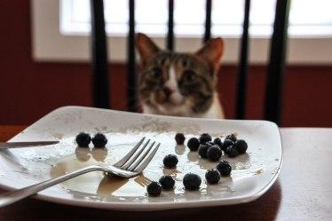 Olivebreakfast