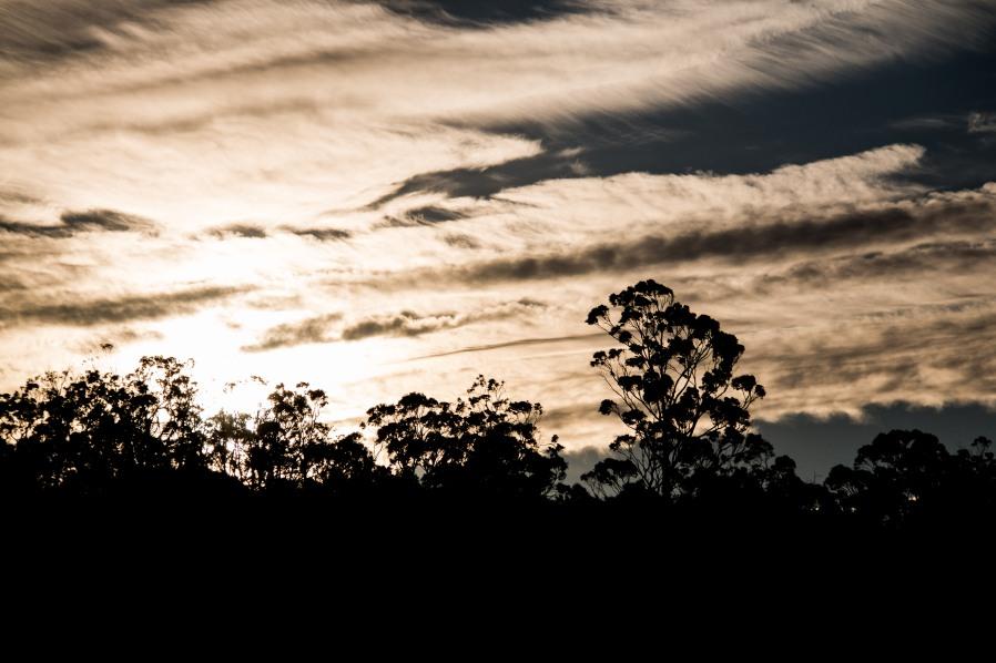 Tasmania142