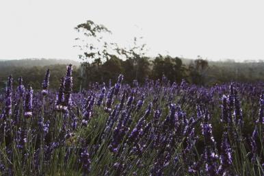 Tasmania158