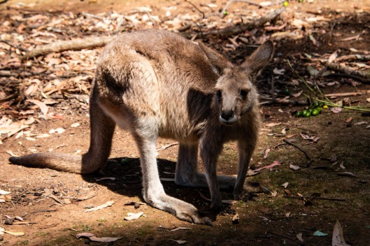 Tasmania27